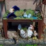 Gnomon Urban Chickens